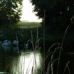 http://www.fiumeoglio.it/wp-content/uploads/2015/10/Bosco_Cascina_Campagna-150x150.jpg